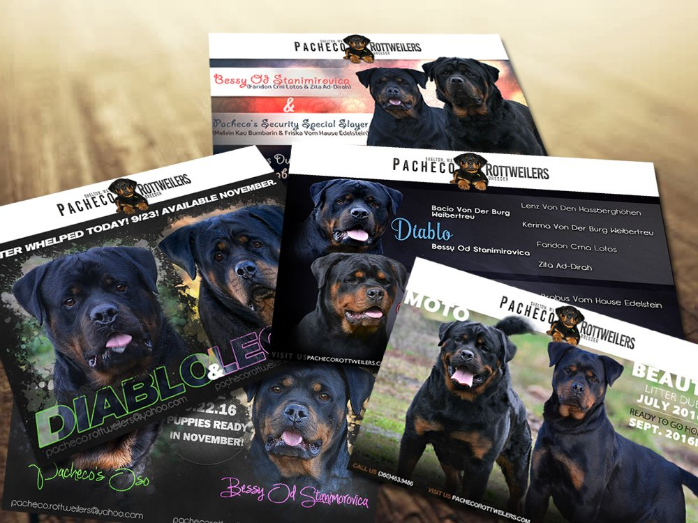 Pacheco Rottweilers Litter Announcements